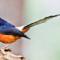 cara sukses bisnis burung kicau
