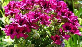 peluang bisnis tanaman hias